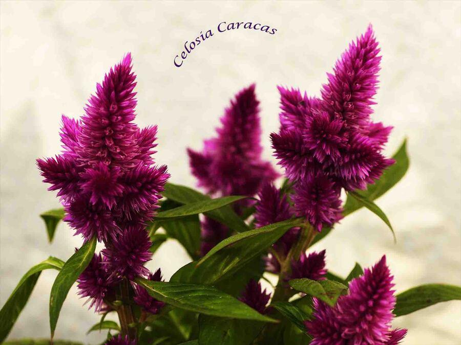 « Les fleurs de mon Jardin 1 »
