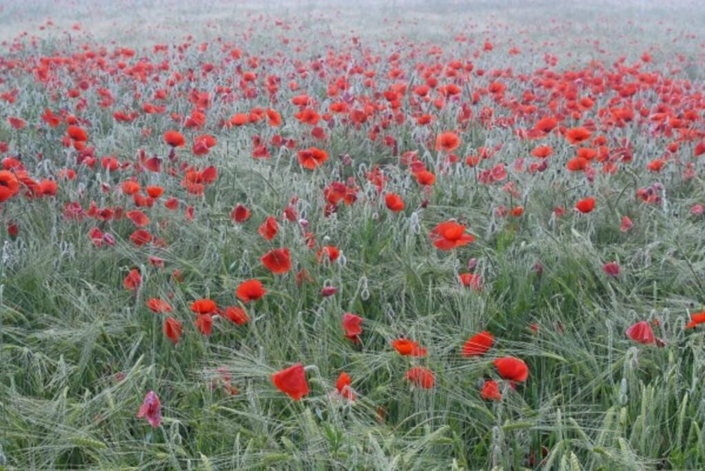 Fleurs-13-0954.jpg