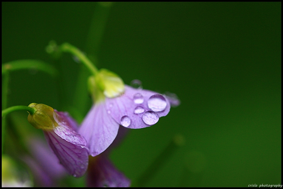 Perles et mauve
