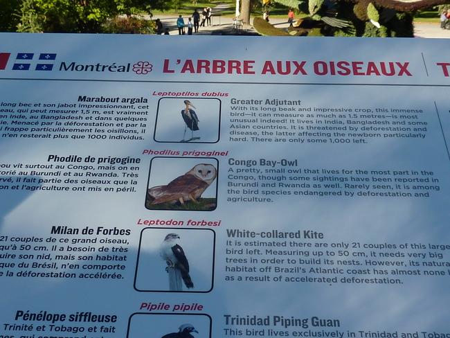 Les mosaïcultures de Montréal - 4 -