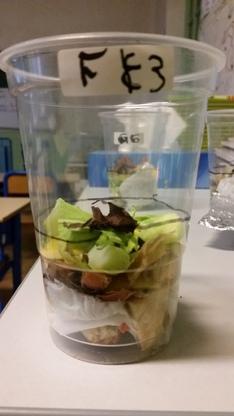 Les déchets biodégradables