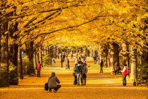 books autumn park tokyo tree leaf