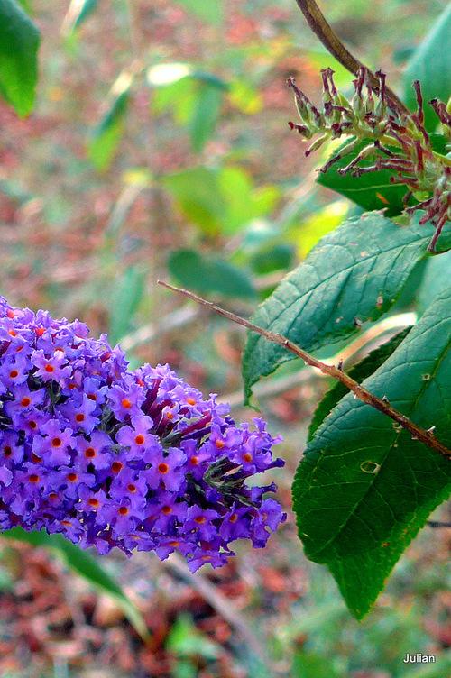 De jolies petites fleurs ...