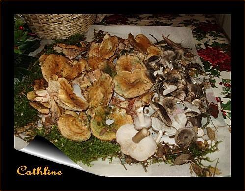 recolte-champignons--du-4-decembre-2011.jpg