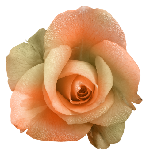 Fleurs Têtes Série 7