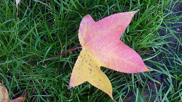 Lumieres-d-automne-sur-le-parc-Monceau-096.JPG