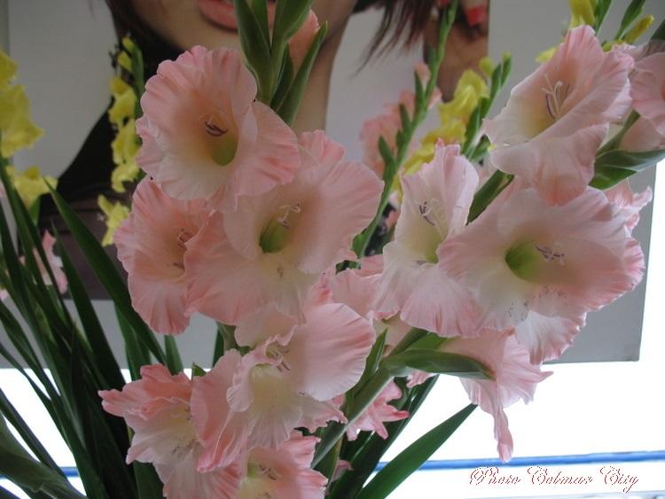 Des fleurs chez le coiffeur 29