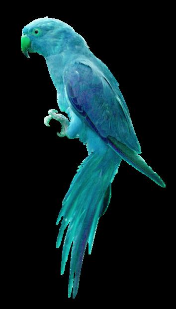 oiseau,perroquet