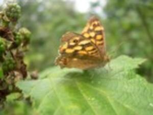 Ballade avec un papillon pendant plus de 2 heures où il n'a pas bougé...