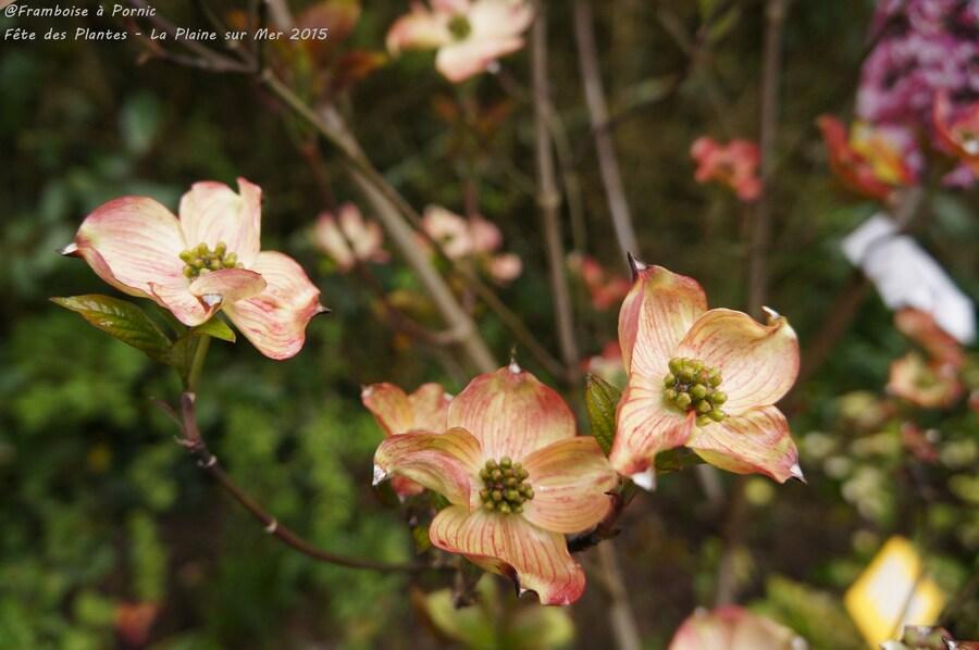 Plantes en Fête - La Plaine/mer - 2015