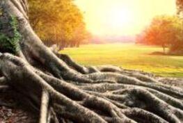 Quelles sont les racines juives/hébraïques ?
