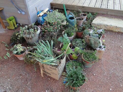 1000 plantes différentes !...