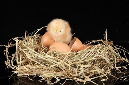 Vendredi haïku, les nids et oiseaux au printemps...