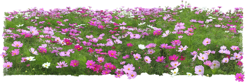 Flowers in the Garden 48.png
