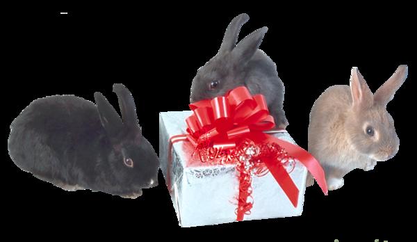 Tubes animaux Noël 1