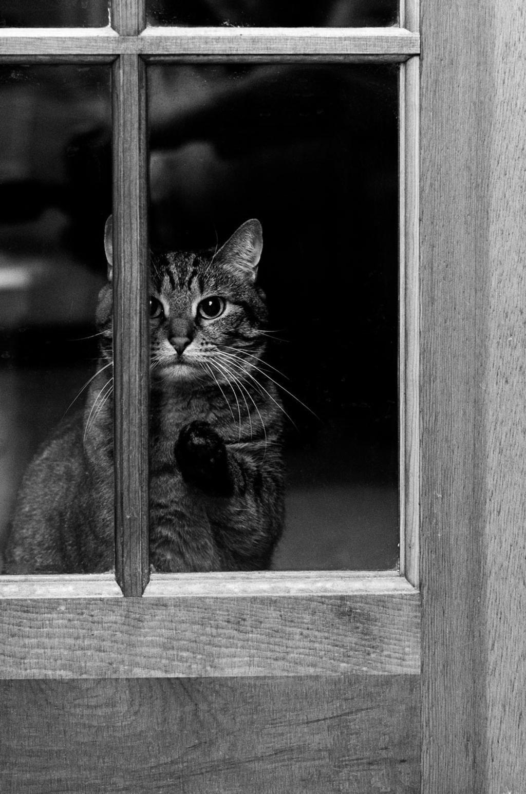 Des chats la fen tre artmic for Les charlots ouvre la fenetre