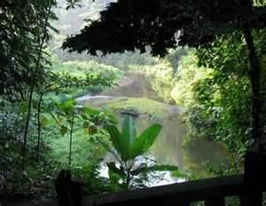 Le parc national d'Odzala-Kokoua