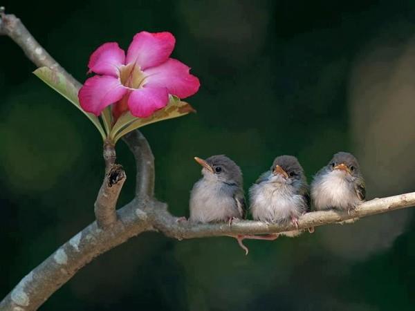 Vendredi ha ku nids et oiseaux au printemps jill bill for Oiseaux de jardin au printemps