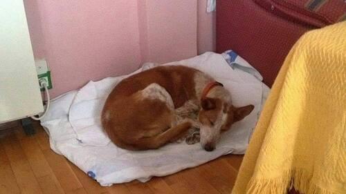 GROS SOS pour Milagro mamie pod en Espagne de retour en box après une maison....