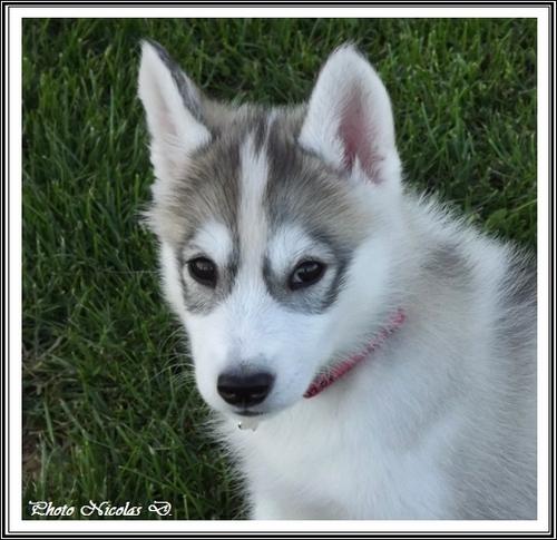 Jenka (2 mois)