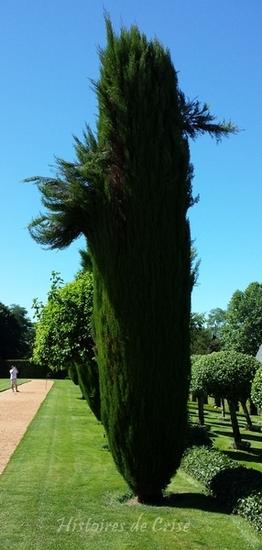 photographie d'arbre