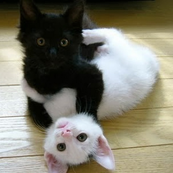 Il Photographie Les Chats Noirs............