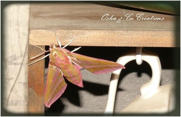 Grand-sphynx-de-la-vigne-papillon-de-nuit-rose-et-vert-kaki.jpg