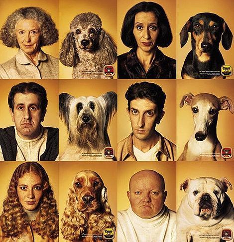 """Résultat de recherche d'images pour """"pub dog ressemblance"""""""