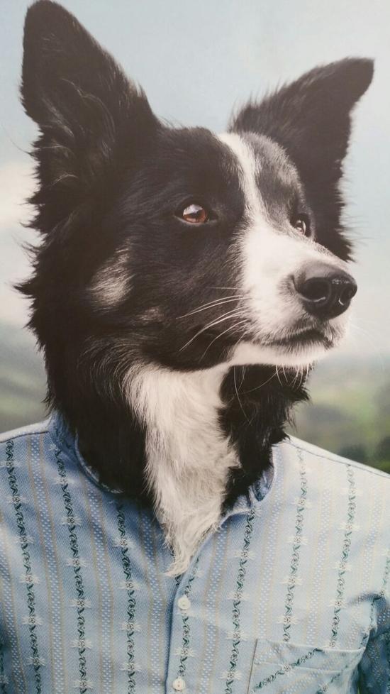 chien chemise gruyere