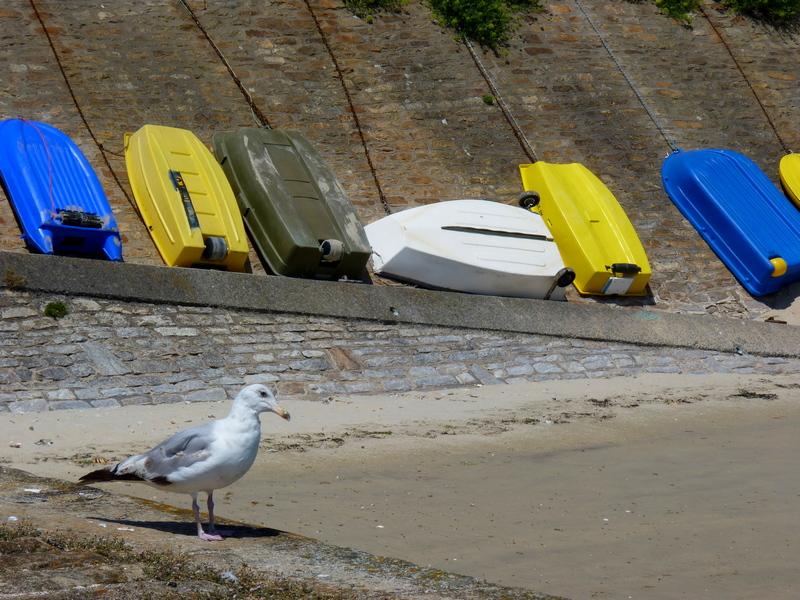 Quiberon,de la côte sauvage au port