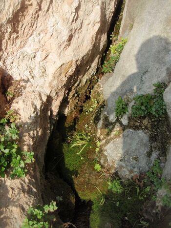 La source des Orris