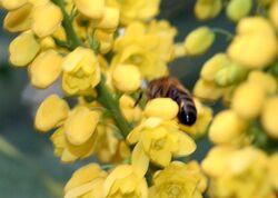 Du nectar cet hiver pour nos abeilles