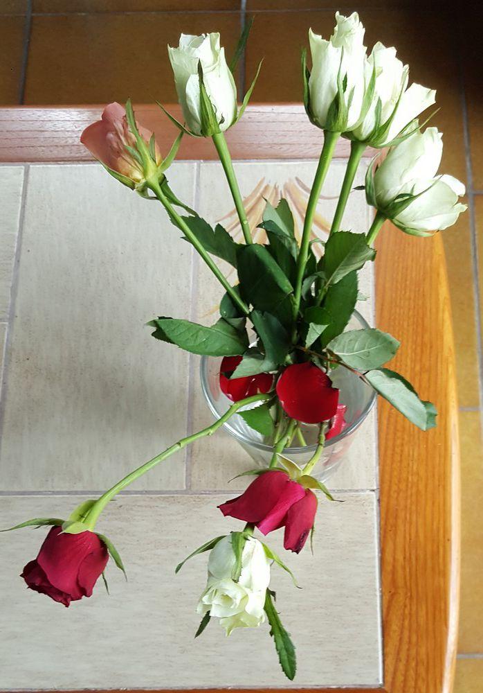8 roses pour la Fête des mères...
