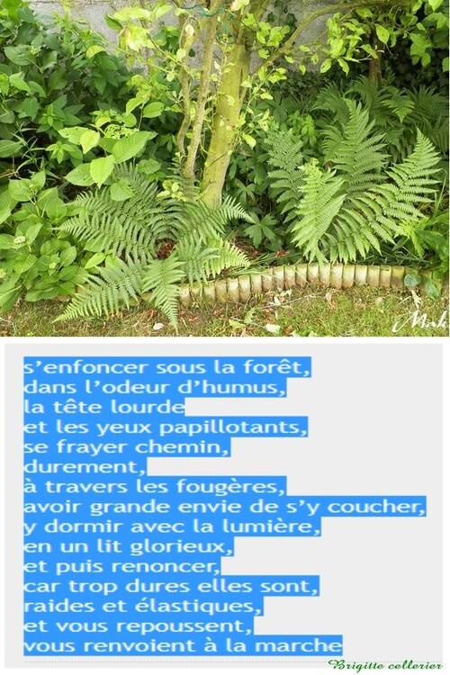 Au coeur de mon jardin - Fourgères