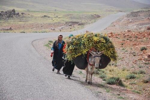Un âne lourdement chargé