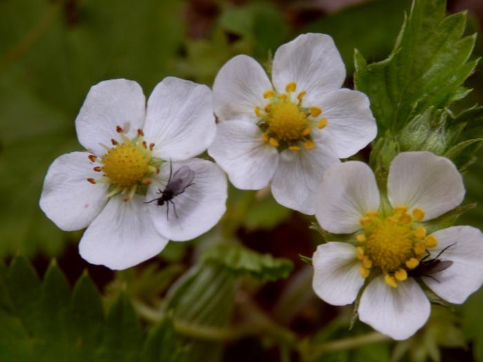 Fleurs d'été diverses.Volet 2.