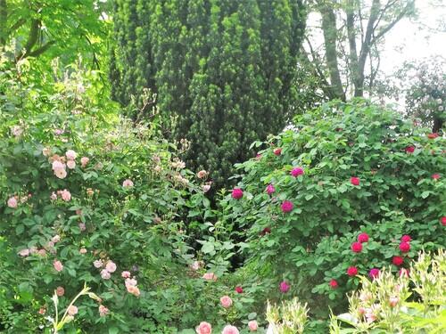 Vues sur le jardin depuis l'intérieur de la maison
