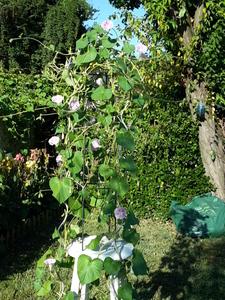 Le nez au jardin