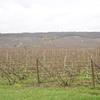 Le vignoble à Ambonnay
