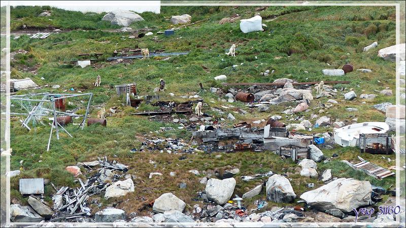 """Les chiens et le """"binz"""" autour des maisons de Kullorsuaq vus du pont de l'Austral - Upernavik - Groenland"""