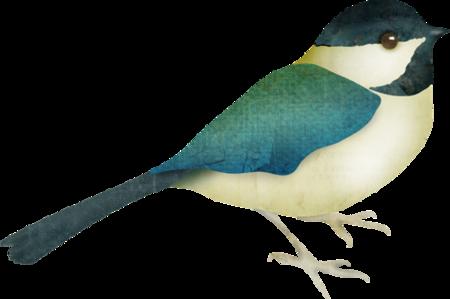 Oiseaux 5