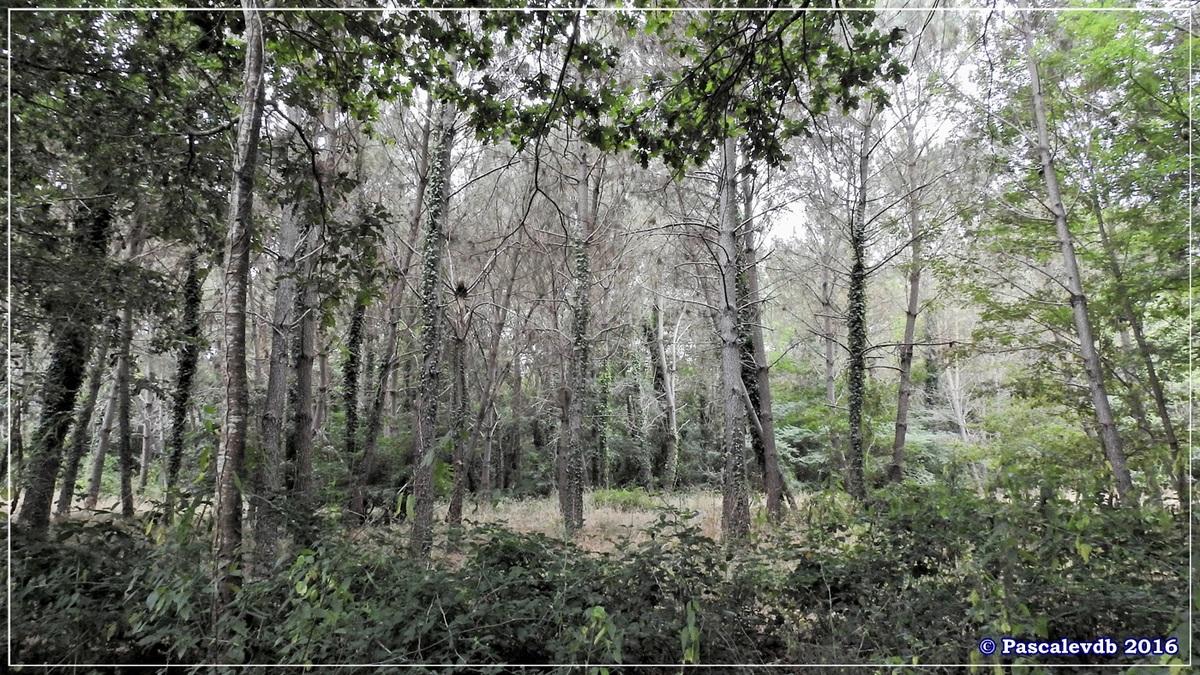 Réserve géologique de Saucats - Août 2016 - Deuxième partie - 5/6
