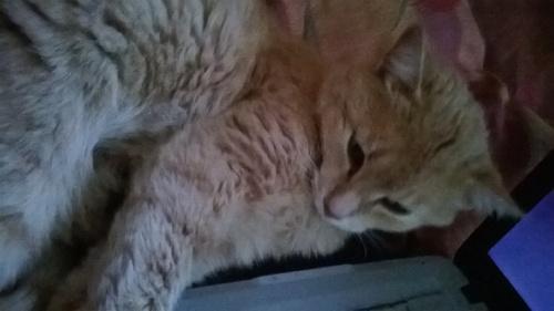 Mon chat  ♥