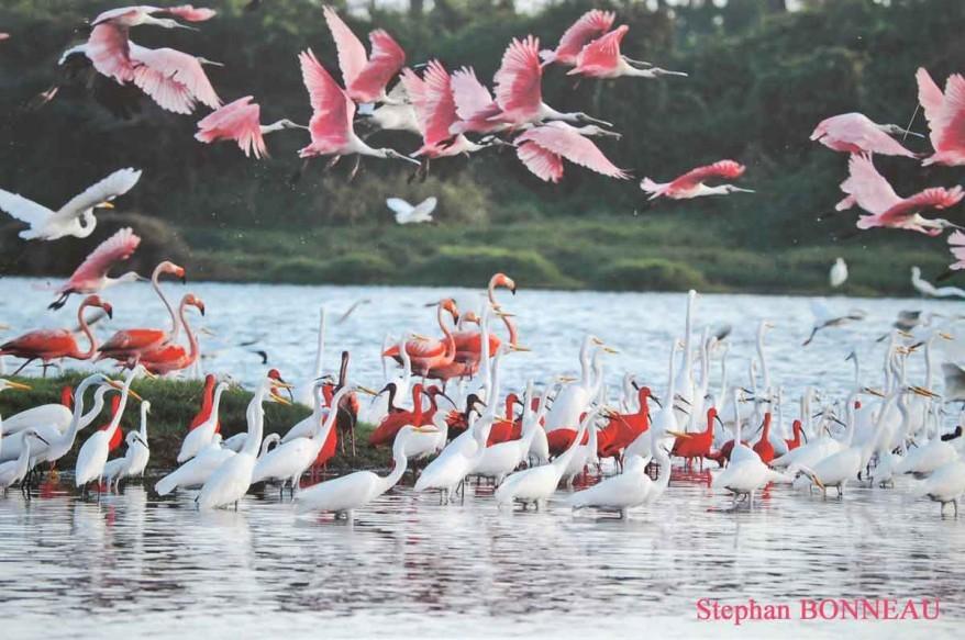 ibis-spatule-1778.jpg