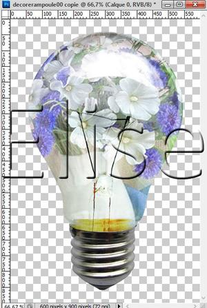 53. Une fleur dans une ampoule