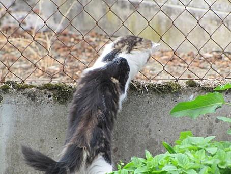 mes-animaux-de-compagnie-et-les-animaux-de-la-nature-7374.JPG