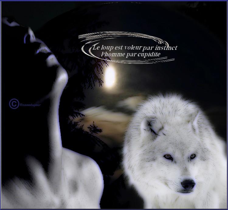 defi loup blanc