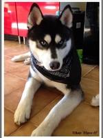 Maïko (12 mois)