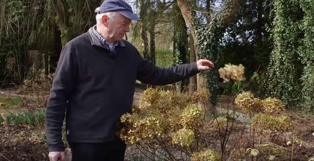 Jardin Jardiniers : La taille des hydrangéas