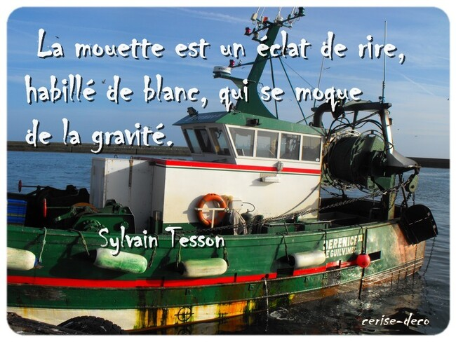 citation : la mouette